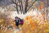 太行山上芦苇荡 芦花伴秋红景色绝美