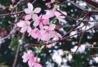 这些樱花季高颜值限定 唤醒沉睡的少女心