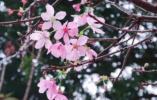 这些樱花季高颜值限定 唤醒?#20102;?#30340;少女心