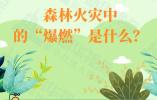 """瞬间夺去30条生命!四川凉山森林火灾中的""""爆燃""""是什么?"""