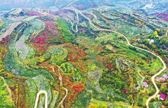 河南灵宝:秋染中原 多彩田园