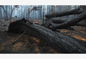 澳总理宣布对林火灾害展开最高级别调查