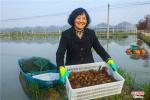 河南光山:小龙虾撬动富民大产业