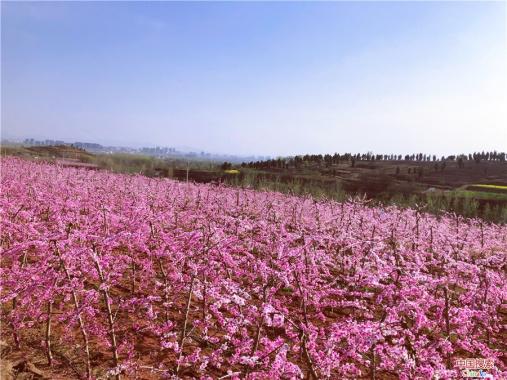 河南郏县:厚植生态底色 绘就绿色画卷