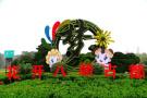 菊花文化节|中国开封菊花文化节临近,你知道它的由来吗?