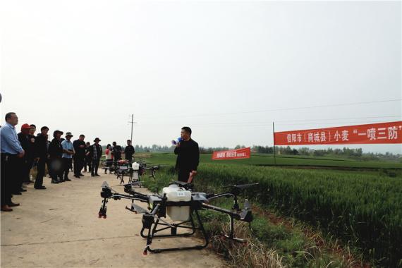 河南商城:无人机飞防 护小麦健康