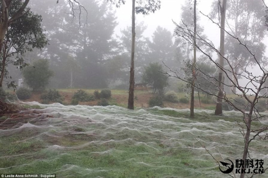 壮观!洪水过后 百万蜘蛛从天而降