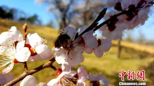 春季赴辽宁赏花观鸟六大特色活动迎海内外游客