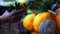烂水果到底能不能吃?水果碰伤冻伤和霉变有何不同?