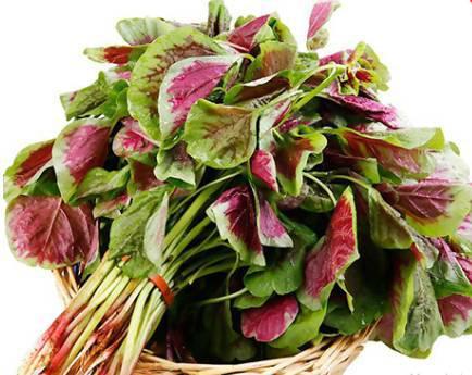苋菜施用有机肥的方法