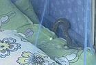 女生宿舍惊现两条蛇