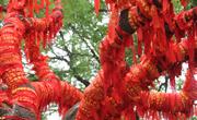 """古树缠满红绳成""""许愿树"""""""