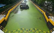 上海淀浦河绿萍泛滥