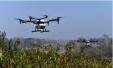 无人机植保飞入农田 耕耘市场还需确立行业标准
