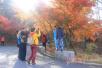 崂山赏叶季人气爆棚 两天接纳近4万游客(图)