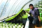 厉害了world哥 胶州村民创出鱼菜共生法养殖模式