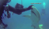 鲨鱼向潜水员求救