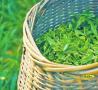 """春茶消费市场既起市场增量呈现:上山是一场""""秀""""?"""