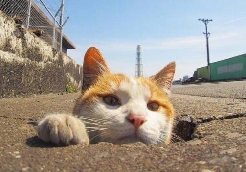 竟然辣末萌!摄影师拍下的流浪猫