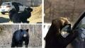 八达岭动物园游客被熊咬伤 探访:开窗投喂现象常见