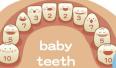 儿童乳牙变蛀牙可致周身危害 莫等换牙才治