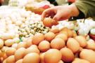 鸡蛋价格环比大涨 火箭蛋为何总是在八月?