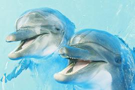 两头海豚落户洛阳 十一可与游客见面