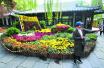濟南趵突泉金秋菊展 10萬多盆菊花亮相將持續一個月