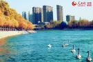 新疆库尔勒初冬