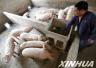 山东省生猪价格有望持续坚挺 蛋价继续向上