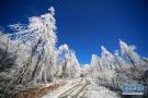 南方雪景不输北国