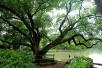 第四十个植树节即将到来 这些年杭州到底种了多少树