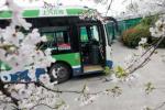 杭城最美櫻花公交站 置身粉色花海中