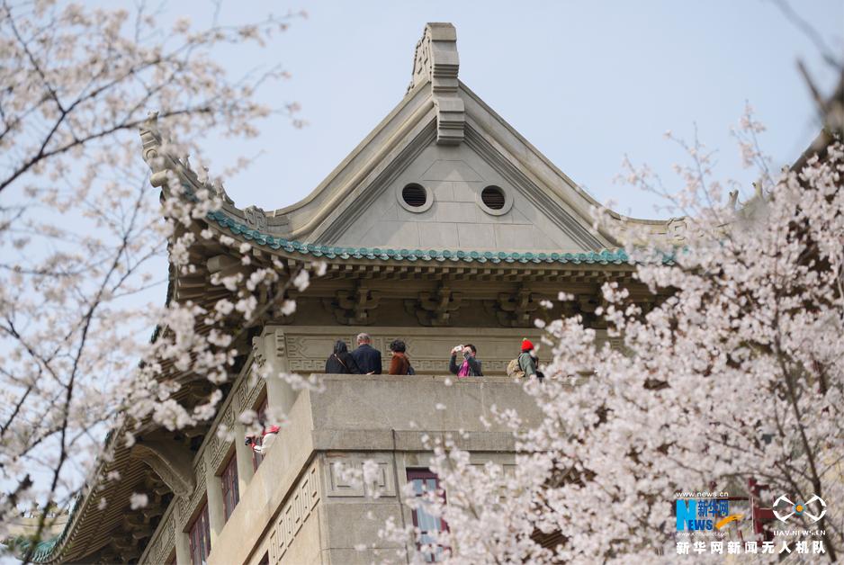 武汉大学樱花烂漫