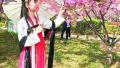鹤壁:汉服美女赏樱花 回眸一笑百媚生