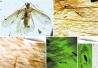 2亿年前的昆虫啥颜色?微结构这样告诉你!