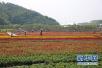 济南:创建10个省级特色小镇 完成农村贫困户危房改造