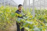 快来看!山东公布2017年度新型职业农民优秀典型