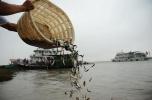 让珍稀濒危物种重回长江!南京连续15年向长江放流2亿尾鱼苗