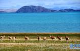国办白皮书:青藏高原仍是地球上最洁净地区之一