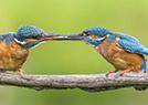 七夕动物亲吻照