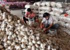 山东农产品目标价格保险为乡村振兴注入新动能