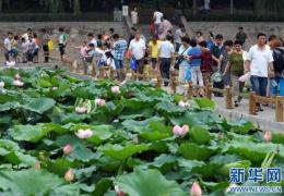 """郑州市紫荆山公园里有个""""外语岛""""你知道它的来历吗?"""