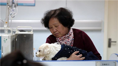 触目惊心!中国人养宠物花了1708亿元