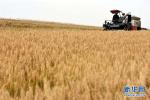 河北春耕备播物资充足 粮食播种面积增加72.5万亩