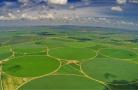 补贴奖励:2019年重点强农惠农政策来了!