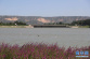 三门峡:夏日天鹅湖 画卷更迷人
