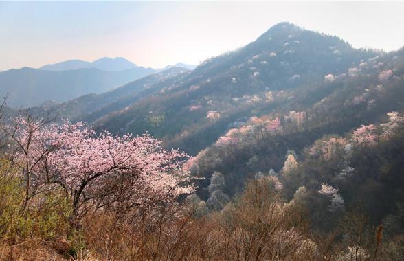 商城县西河山樱花节开幕 快来与樱花邂逅一场浪漫之约!