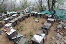 大连养蜂人 家在花香处 蜜蜂转场1000多公里是挑战