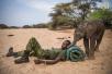 肯尼亚拯救幼象行动:保护幼象就是保护人类